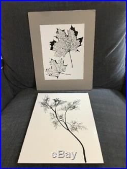 2 Naomi Savage Photographs Dill and Maple leafs VINTAGE MOUNTED Museum Photos