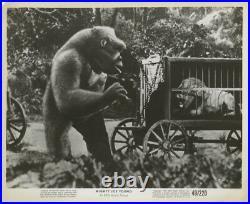 MIGHTY JOE YOUNG Original Vintage photo still Lion 1949