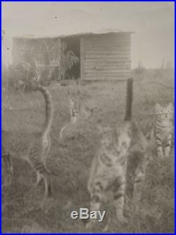 Vintage Artistic Ghost Wandering Cats Feline Exposure Fine Art Vernacular Photo