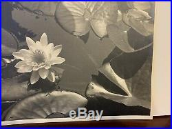 Vintage Edward Weston Original Photograph Signed & Dated 1937 Nature Lily Pads
